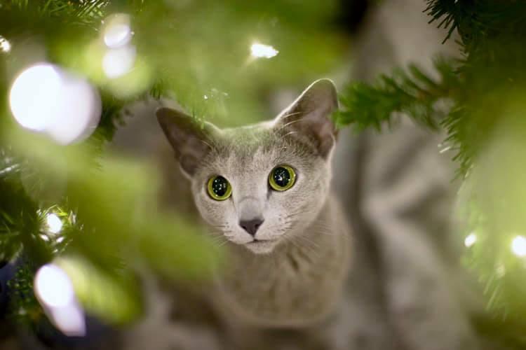 Cuadro de gato enmarcado por ramas de árbol de Navidad