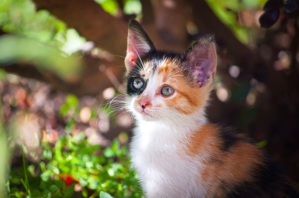 Gatito en el patio