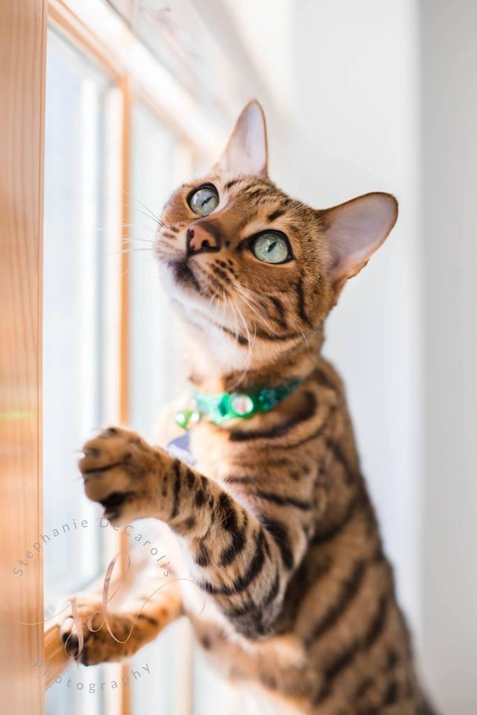 Gato subiendo por la ventana