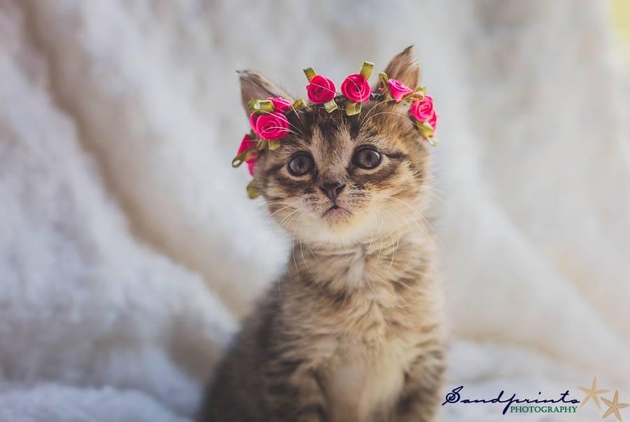 Gatito con pieza floral rosa en la cabeza