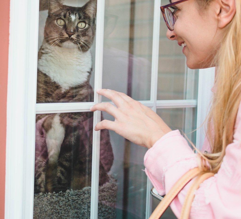 Mujer tocando la ventana junto al gato