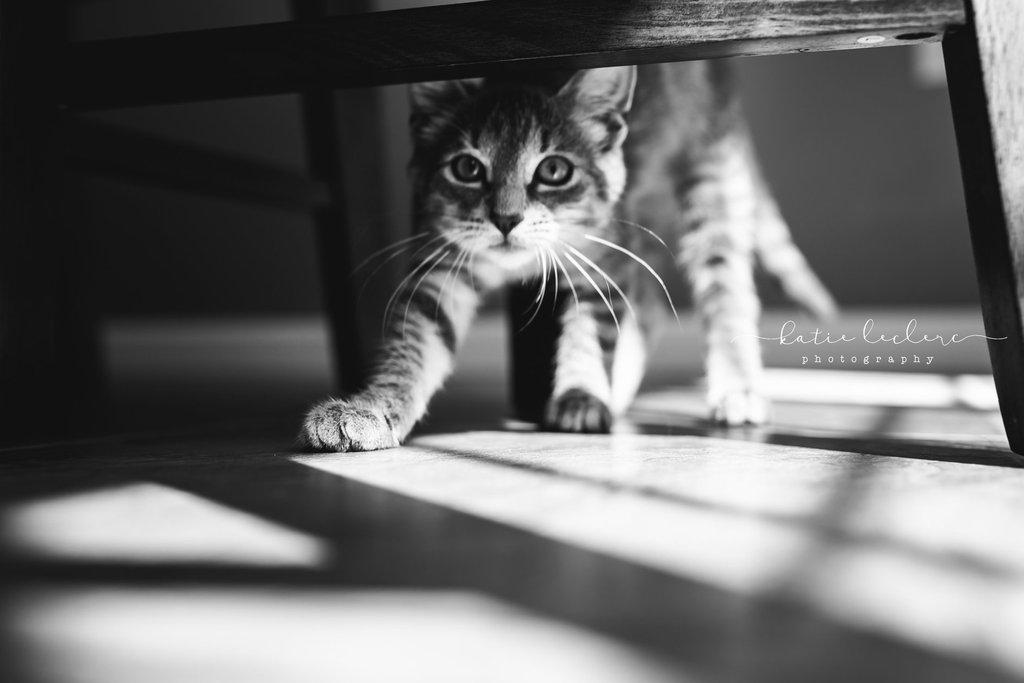 Gato que se extiende debajo de la mesa