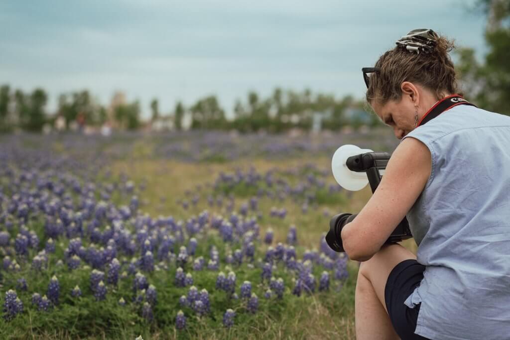 Fotografía bluebonnet de Texas