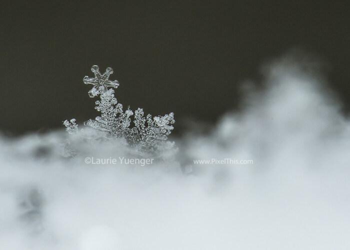 Cómo fotografiar copos de nieve de cerca