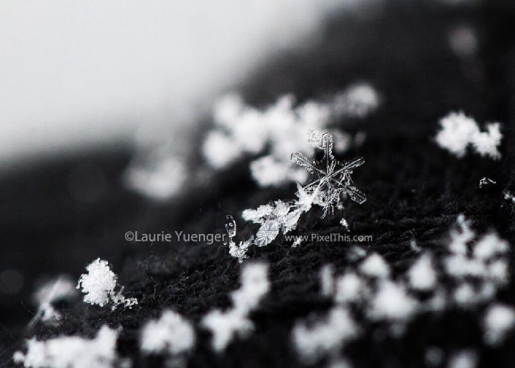 Fotografía de copo de nieve de cerca