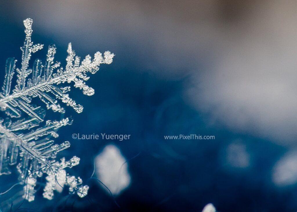 Fotografía macro de copo de nieve
