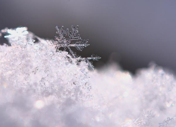 Grandes consejos para fotografiar copos de nieve