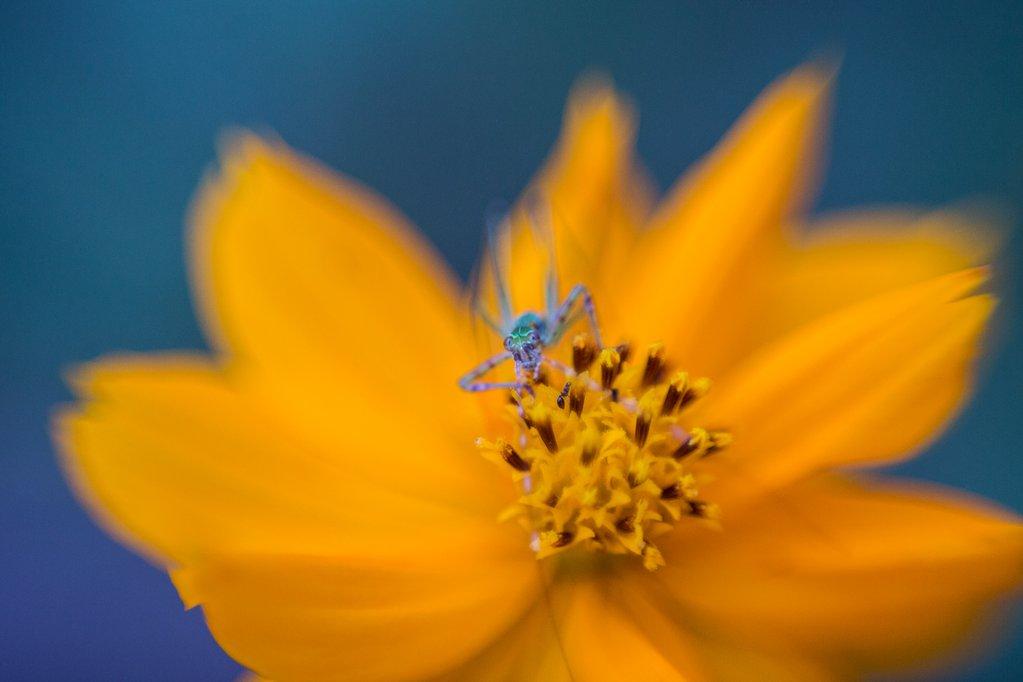 Fotografía macro de Freelensing de una flor amarilla