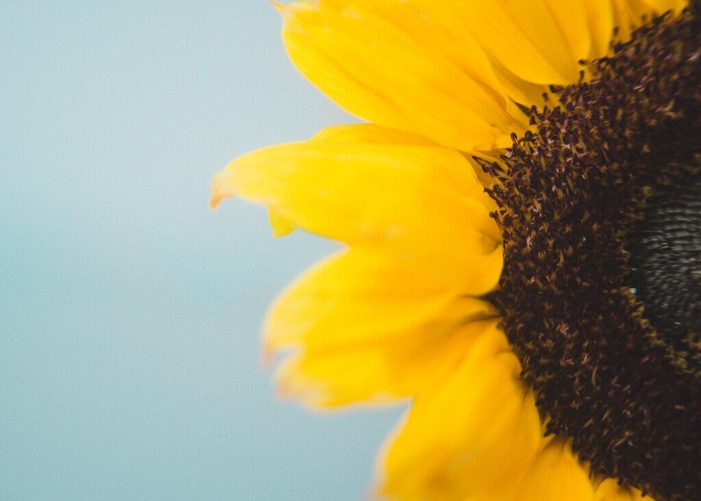 Fotografía en perspectiva - Imagen de flor amarilla llenando el marco