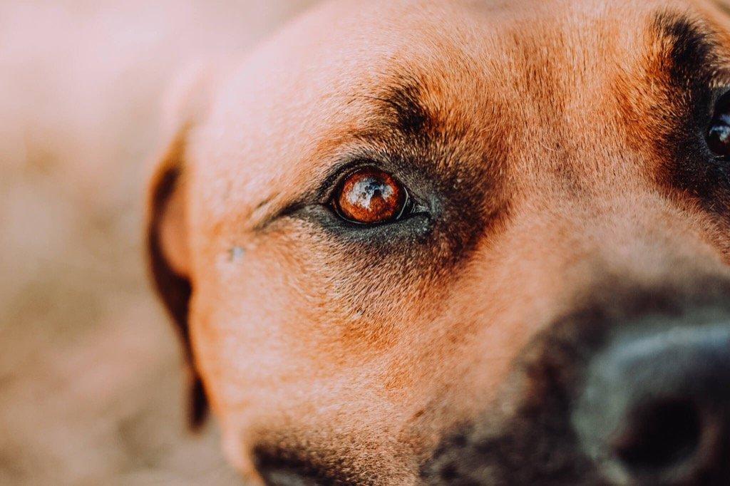 Foto favorita de 2019 - Detalles de Sweet Dog