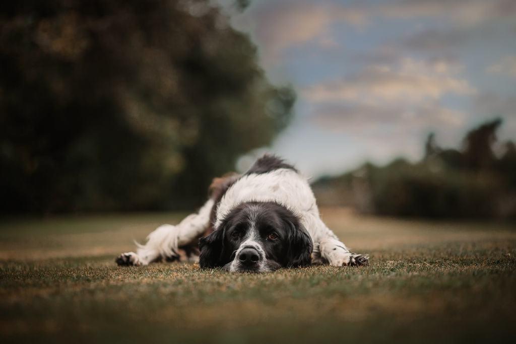 Kelly-anne Gladwin - Fotografía de mascotas