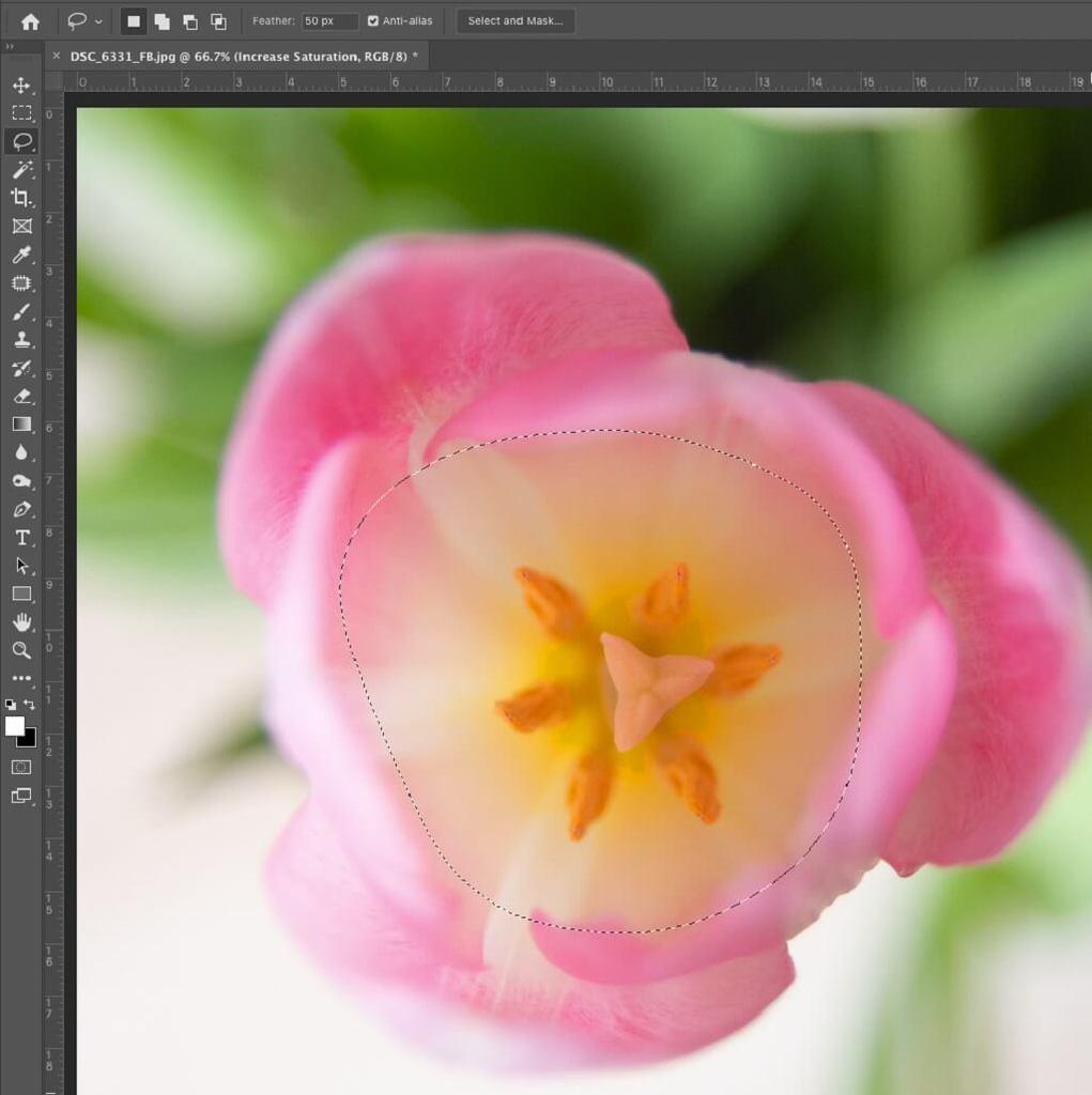 Cómo usar Lasso en Photoshop