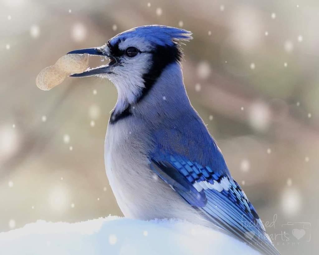 Foto favorita 2018 - Fotografía de aves