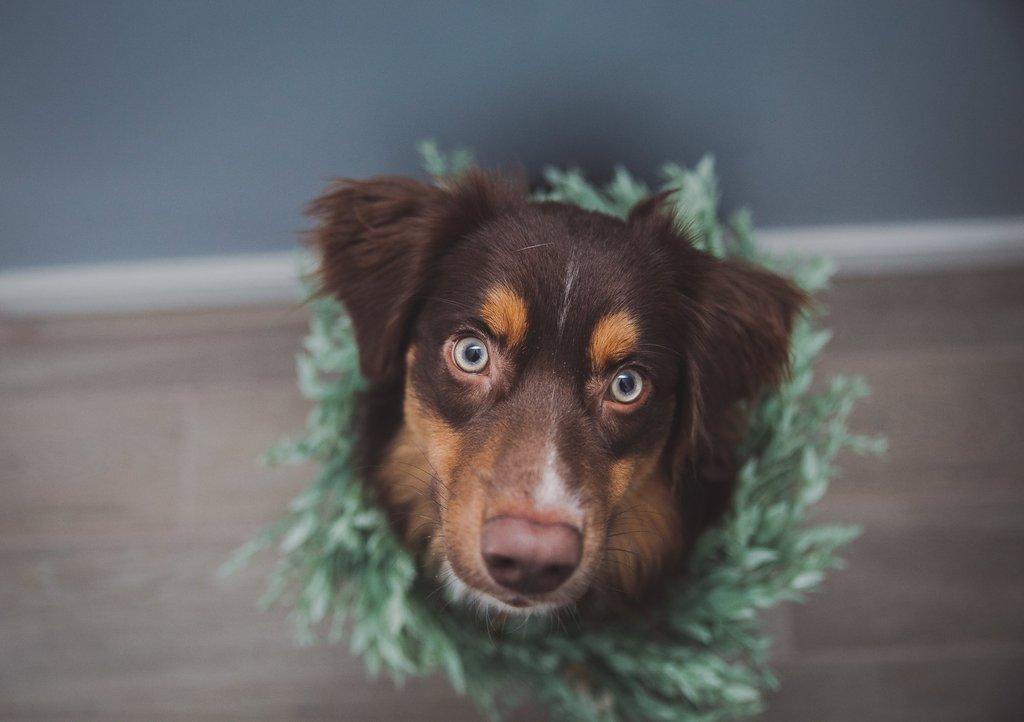 2018 mejores fotos - perro con corona