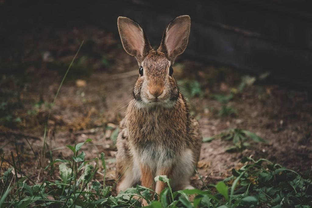 Mejores fotos de 2018 - Conejo
