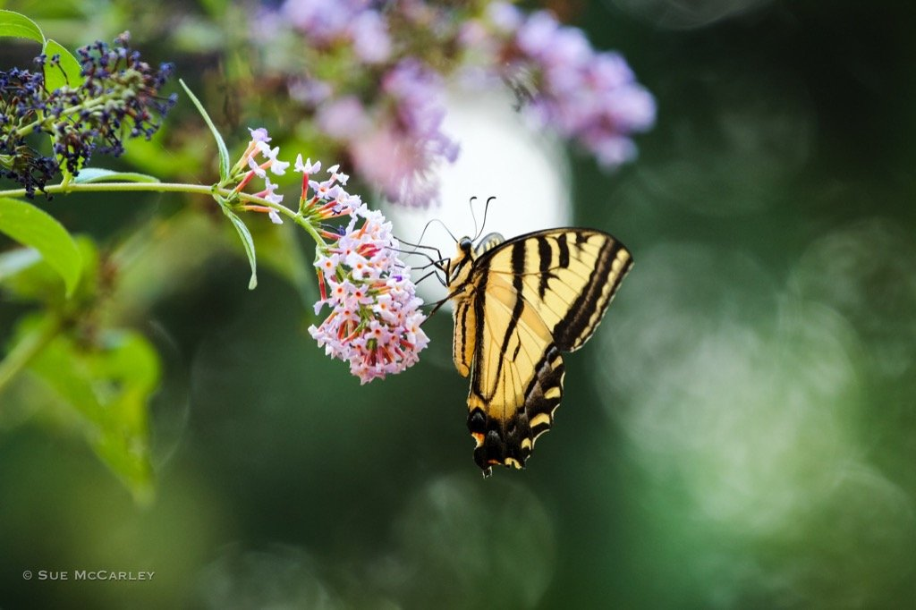 Mariposa sobre flores de primavera