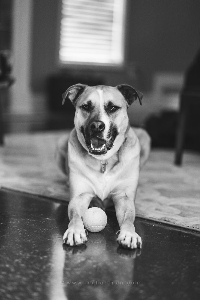 Fotografiar a su mascota