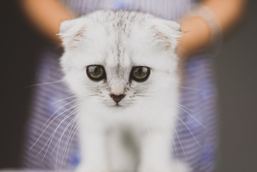 Pretty Presets for Lightroom Photo Challenge Ganador Hermoso gatito blanco en brazos de una niña