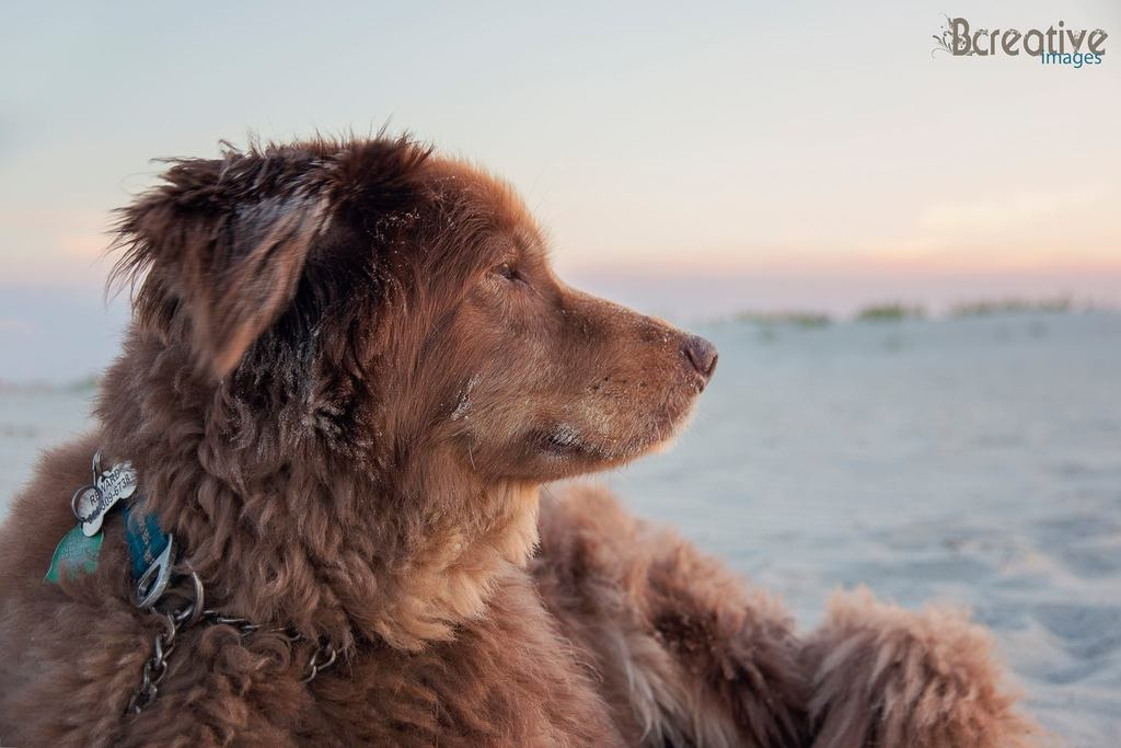 Pretty Presets for Lightroom Photo Challenge Winner - Perro mirando en la playa