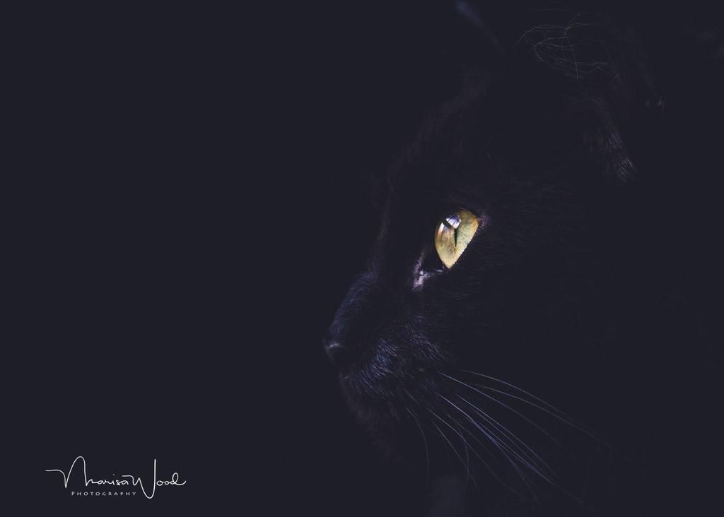 Gato negro fotografiado sobre un fondo negro - Pretty Presets Photo Challenge