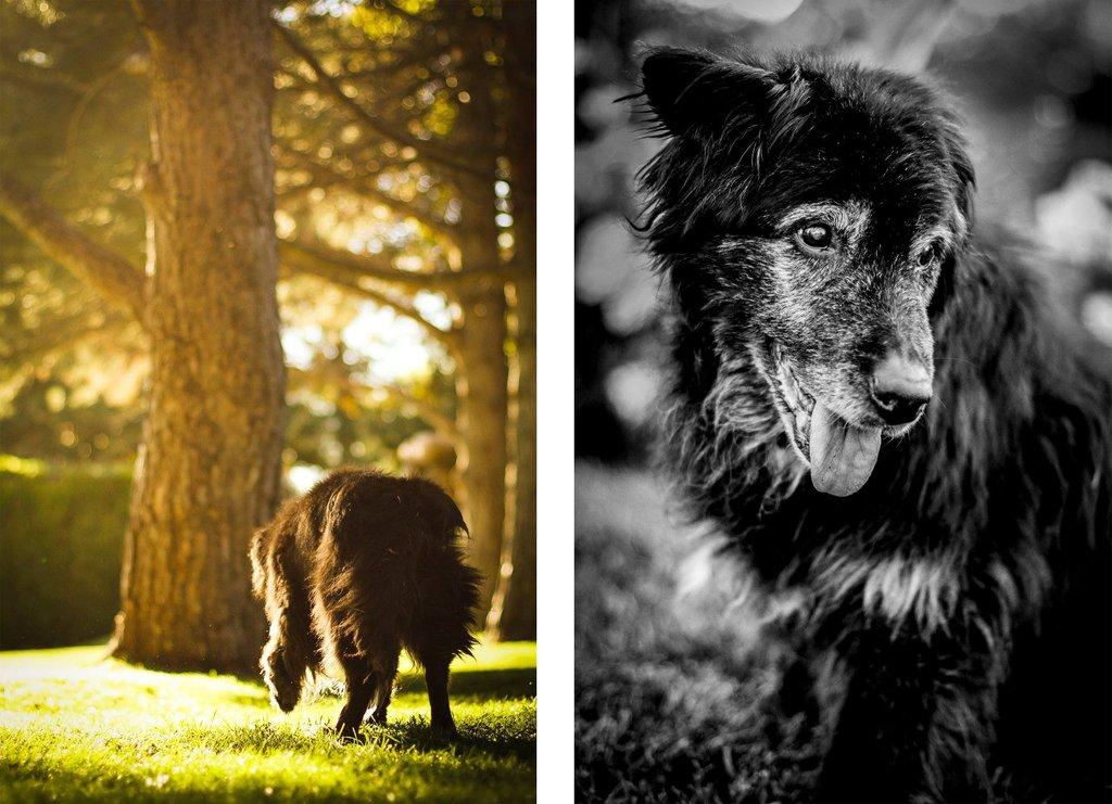 perro mayor paseando por el bosque - Pretty Presets Photo Challenge