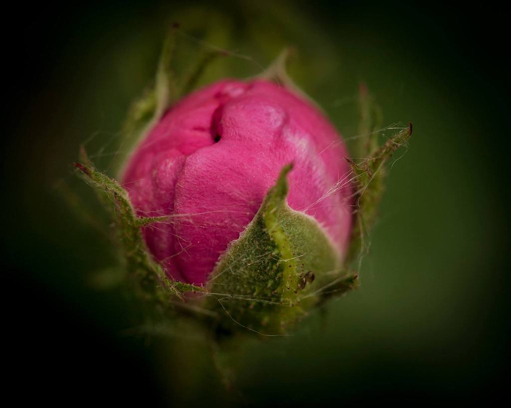 Desafío de fotos de flores