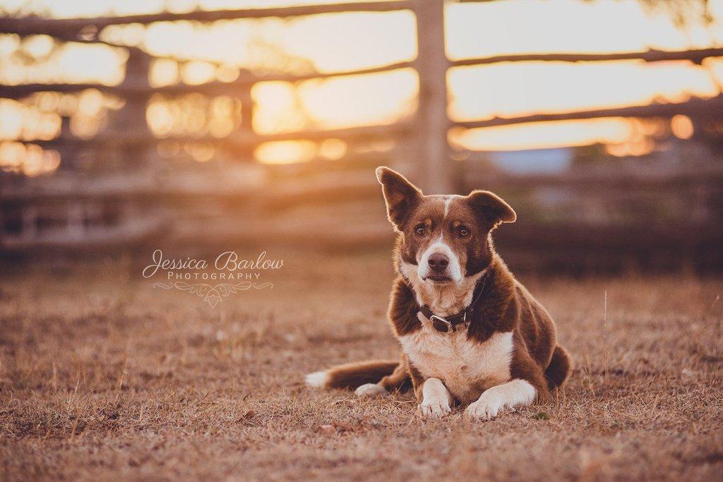 Desafío de fotos de mascotas