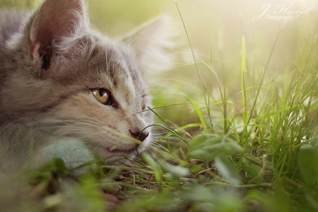 Desafío de fotos de animales