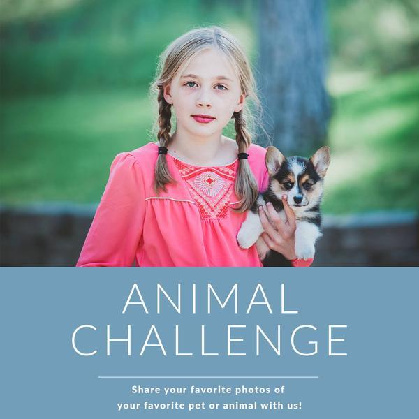 Photo Challenge: Animales: bonitos presets para Lightroom