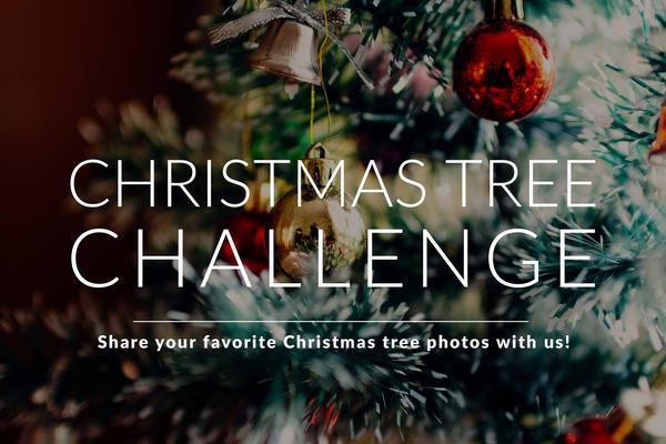 Árbol de Navidad: se anuncian los ganadores del desafío de fotografía