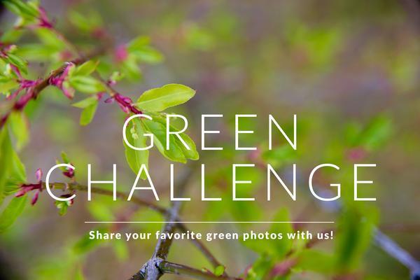 Desafío de fotografía – Verde – Bonitos presets para Lightroom