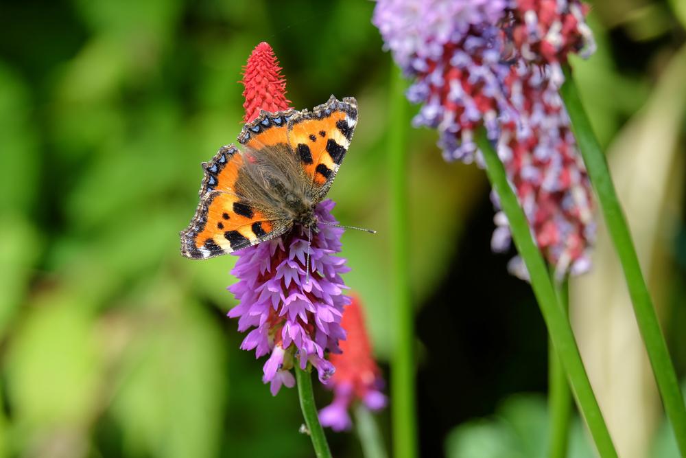 Consejos básicos para la fotografía de mariposas