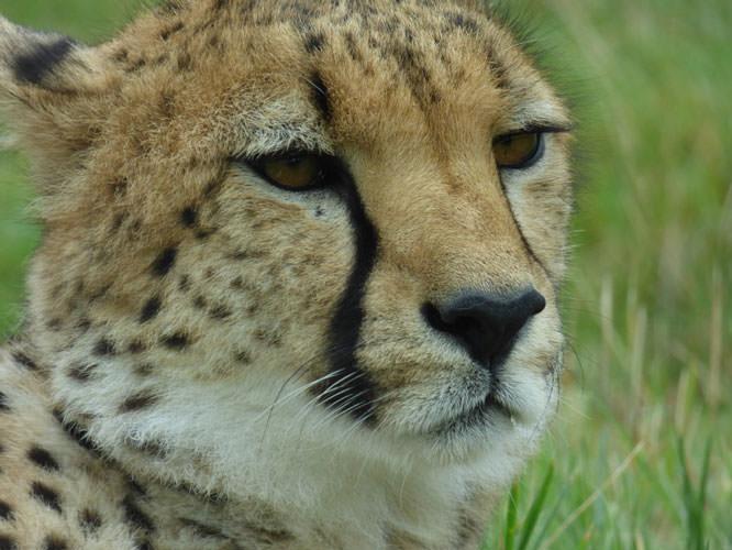 Cómo fotografiar animales en los parques de vida silvestre del Reino Unido