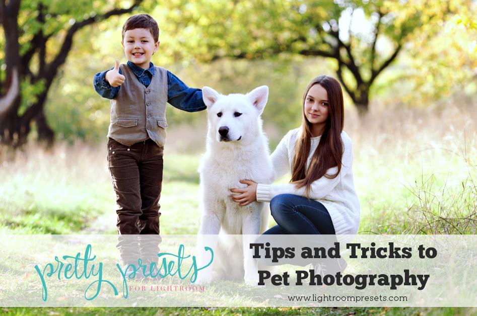 Consejos y trucos para la fotografía de mascotas