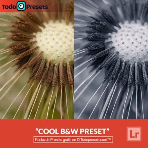 Lightroom Preset Cool B&N
