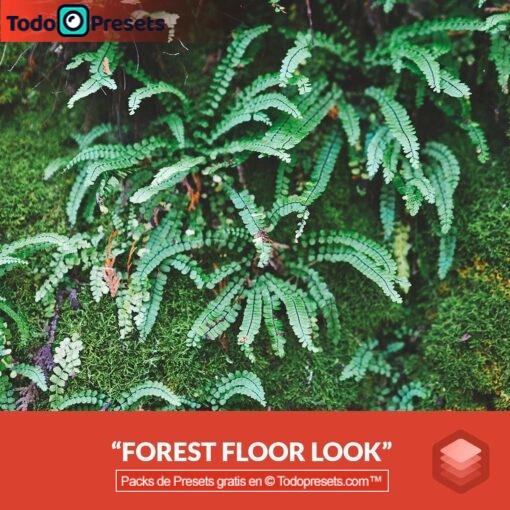 Piso de bosque de aspecto Luminar gratis
